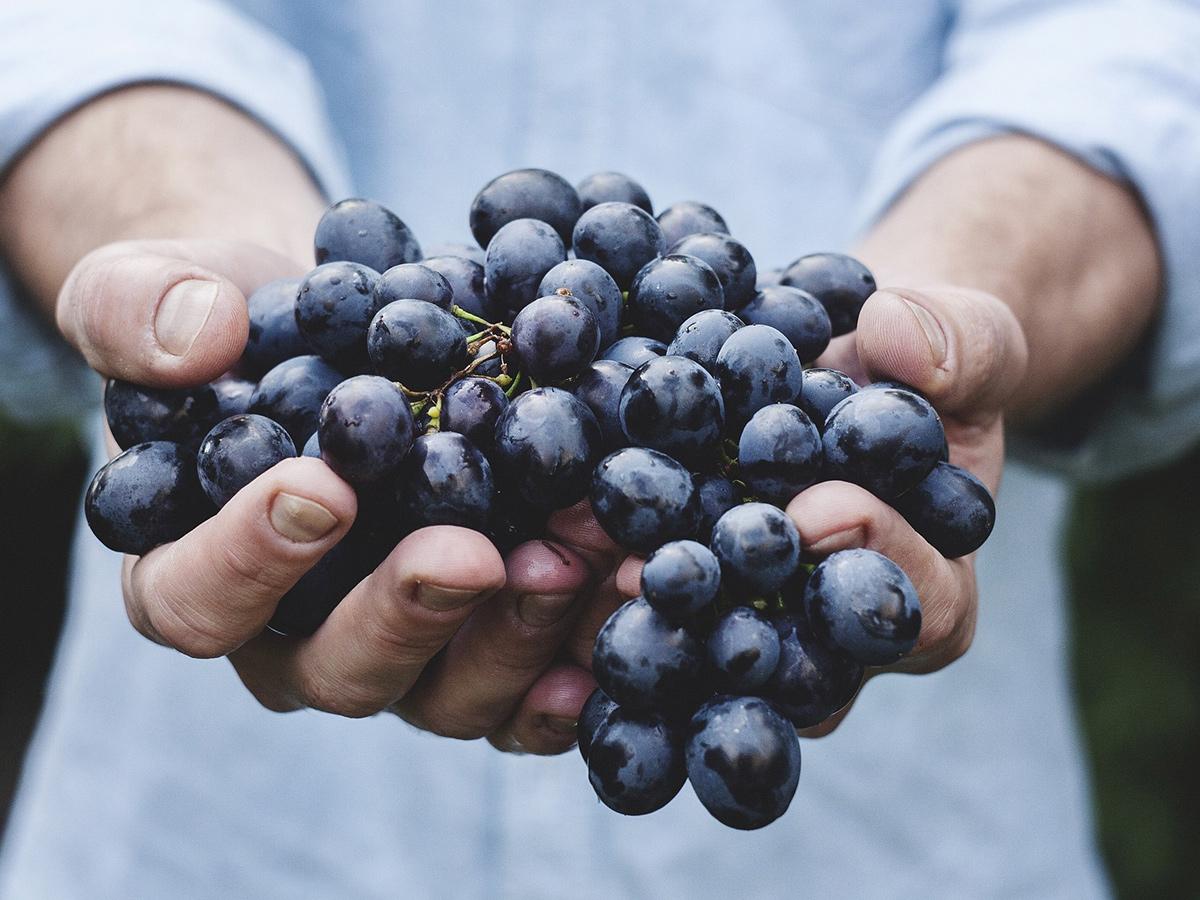 Ore 11.20 - Visita Azienda Agricola & Degustazione vino