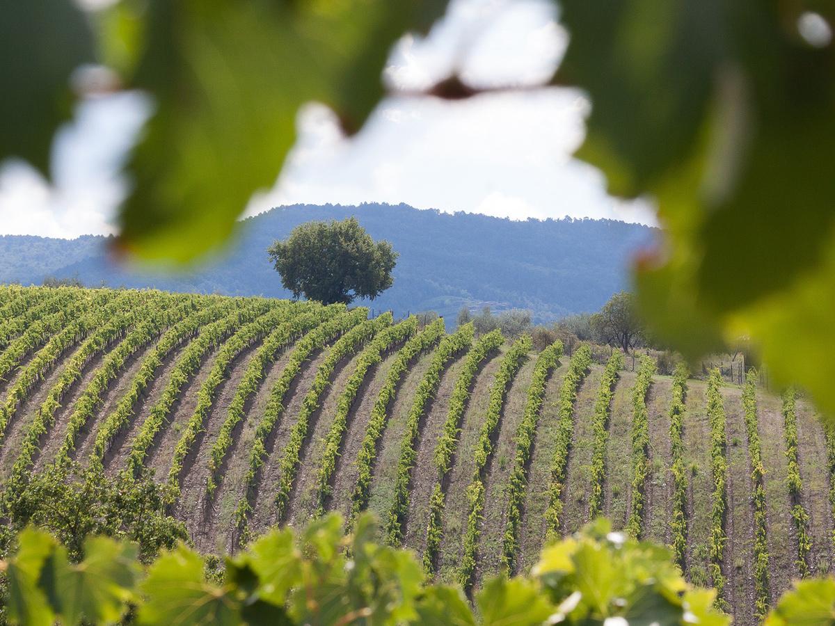 Giorno 1 - Trasferimento da Roma ad Agriturismo in Toscana centrale, Check in hotel