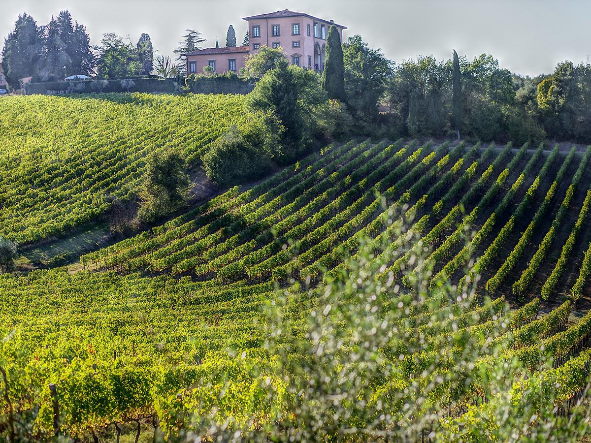 Domenica - Giorno 2 - Degustazione e Visita di Bolgheri e Castagneto Carducci